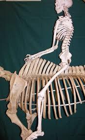 horsehumanspine1